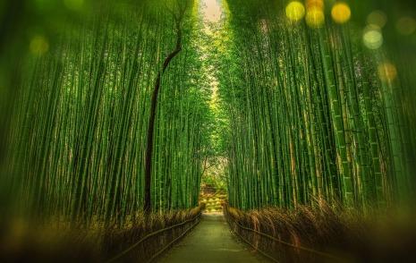 Arashiyama forest
